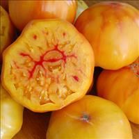 Tomato 'Gold Medal'