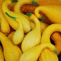 Squash - Summer 'Early Summer Crookneck'