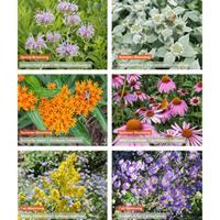 Pollinator Preferred Plant Collection - 5 Star Natives for Well-Drained Soils