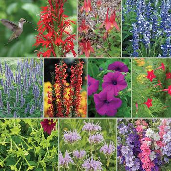 Hummingbird Magnet Garden Seed Collection