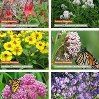 Pollinator Preferred Plant Collection - 5 Star Natives for Medium-Moist Soils