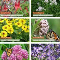 Pollinator Preferred Plant Collection - 5 Star Natives for Medium-Moist Soils