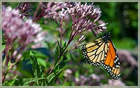 Native Pollinator Favorites