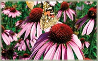 Perennial Herbs & Edibles