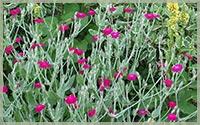 Organic Perennial Seeds
