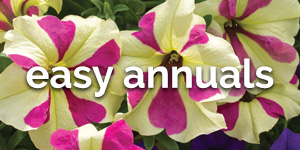 Shop Easy Annual Plants