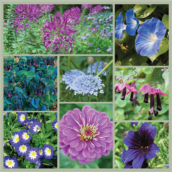 Summer Twilight: Violet, Purple and Blue Garden Seed Collection