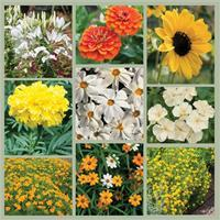 Summer Light: Yellow, White and Orange Garden Seed Collection