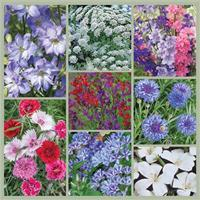 Patriotic Posies: Red, White and Blue Early Summer Garden Seed Collection