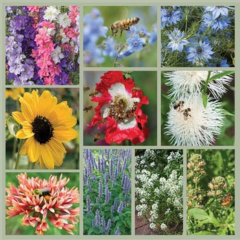 Bee-Friendly Garden Seed Collection