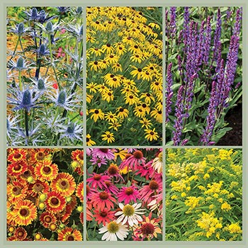 Perennial Pollinator Garden Plant Collection