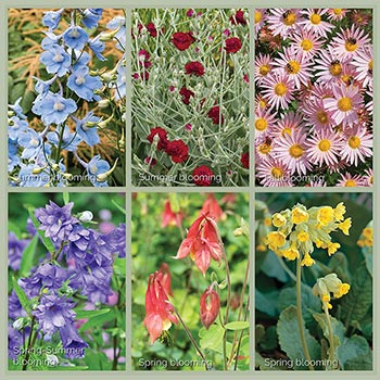 Cottage Garden Perennials Heirloom Plant Collection