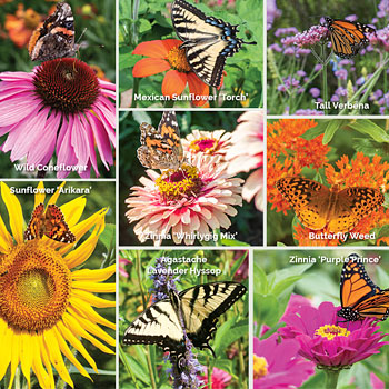 Butterfly Haven Garden Collection