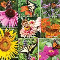 Butterfly Haven Pollinator Garden Collection