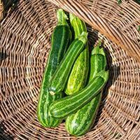 Zucchini 'Cocozelle' Organic