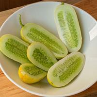 Cucumber 'Boothby Blonde' Organic