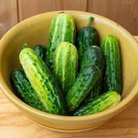 Cucumber 'Little Leaf H-19' Organic