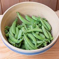 Pea - Snap 'Sugar Ann' Organic