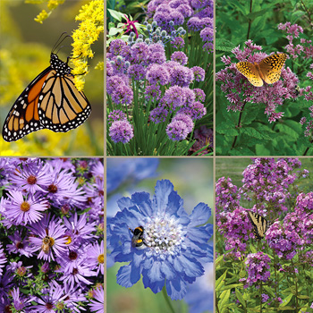 Bee and Butterfly Gambol Plant Collection