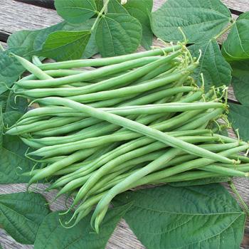 Bean - Snap 'Calima'