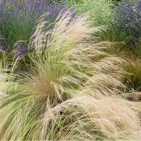 Grass - Feather 'Pony Tails'