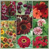 Summer Love: Chocolate and Garnet Bouquet Garden Seed Collection
