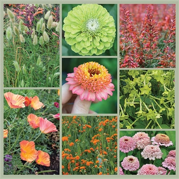 Summer-licious: Peach, Lime and Lilac Garden Seed Collection